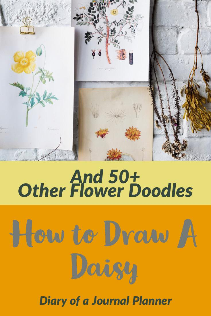 How to draw daisy, easy step by step doodle daisy flower tutorial