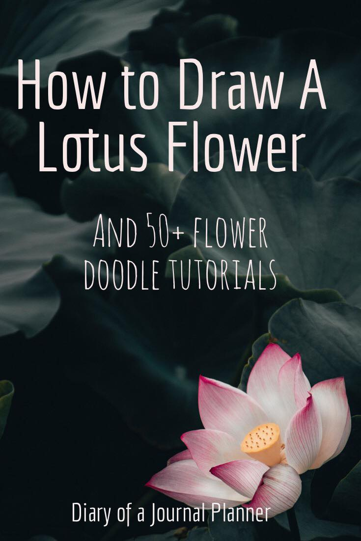 Learn how to draw flowers, including roses, lotus, tulip easy step by step doodles and flower drawing tutorials