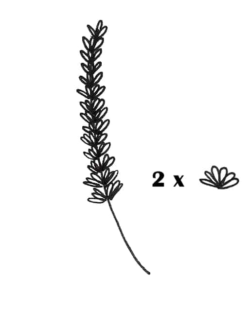 how to draw lavender plant